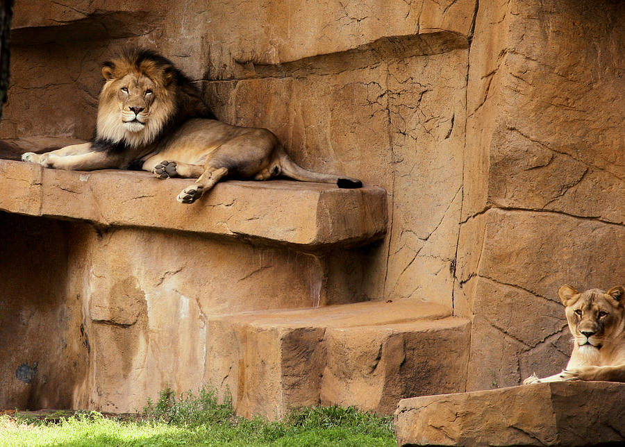 King and Queen by Bruce Richardson