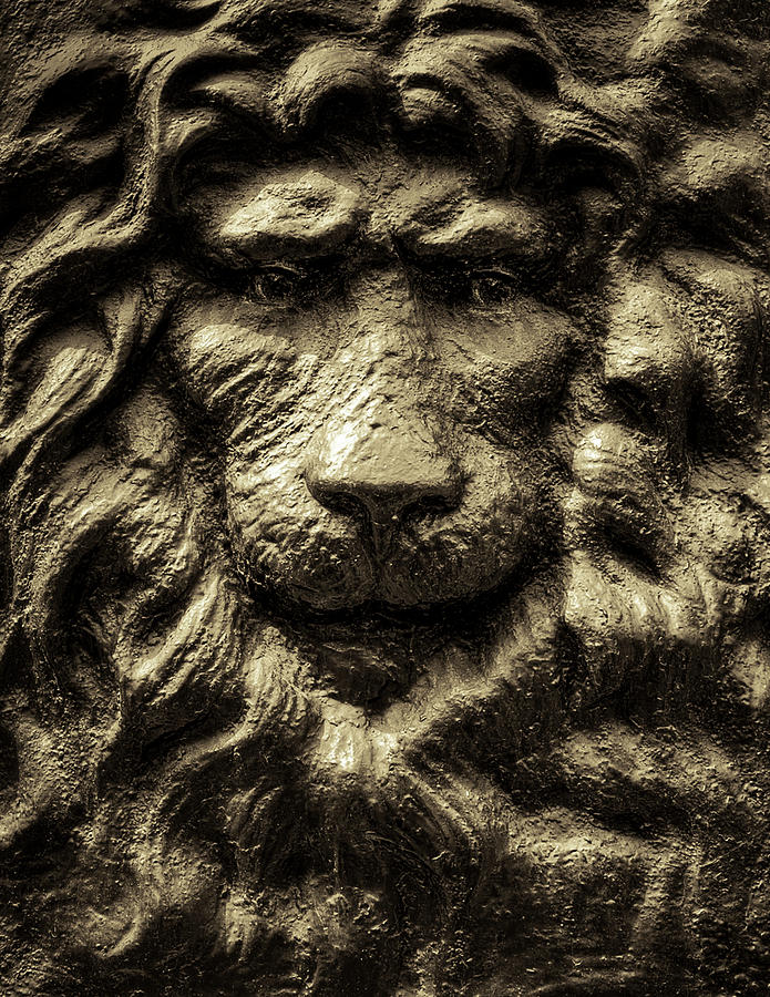 Lion Photograph - King by Andrew Kubica