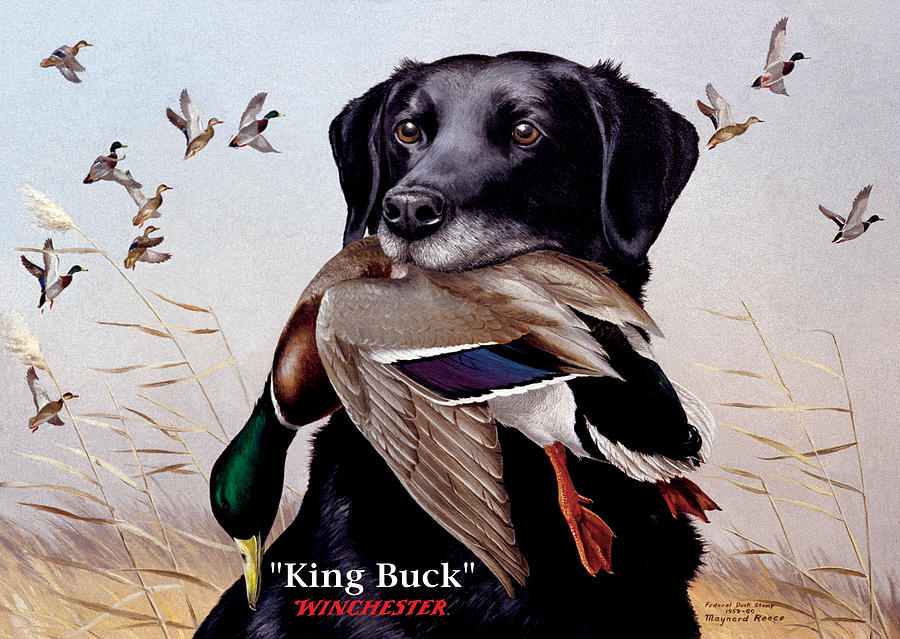 Dog Painting - King Buck    1959 Federal Duck Stamp Artwork by Maynard Reece