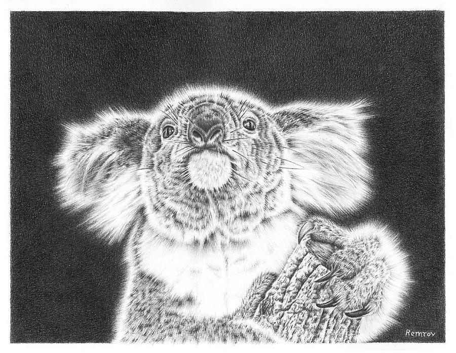 King Koala by Remrov