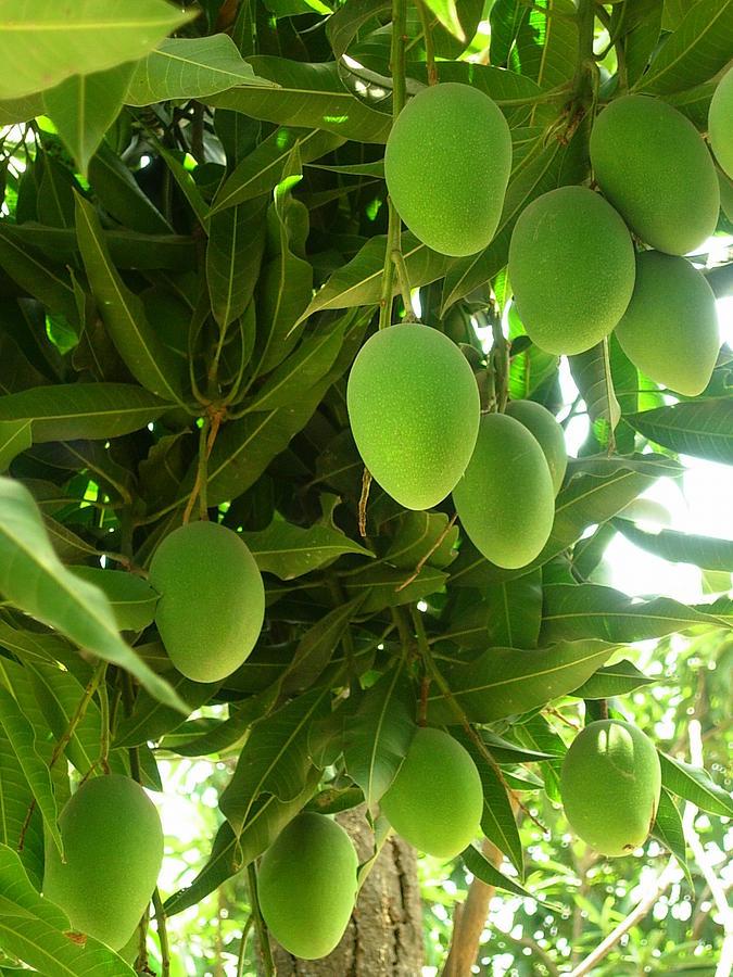 Fruits Photograph - King Of Fruits by Karuna Ahluwalia