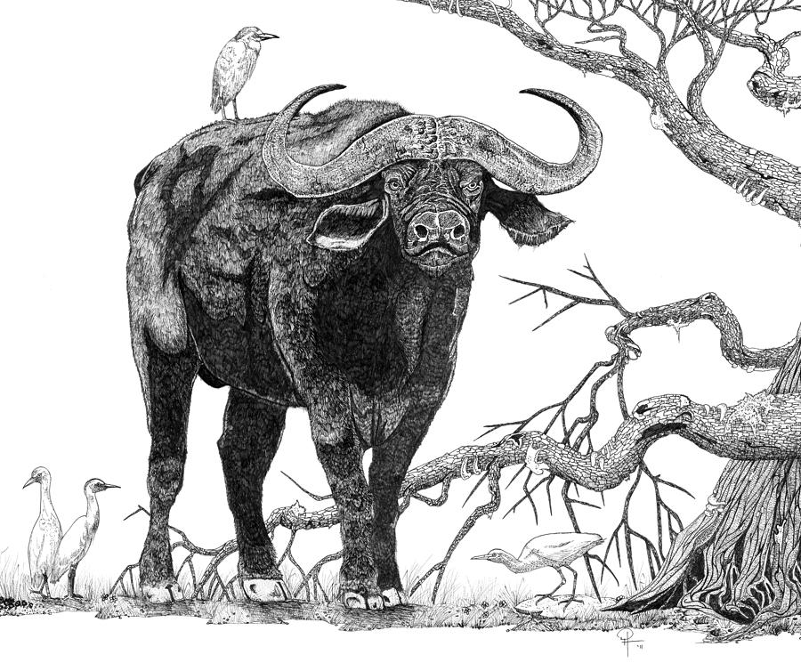 It's just a picture of Wild Drawing Of A Buffalo
