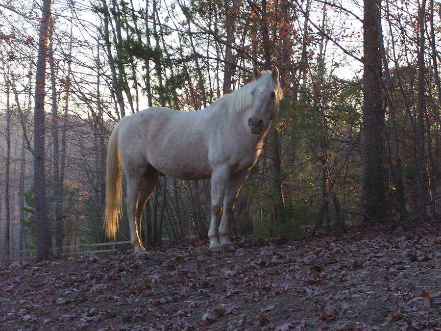 Horse Photograph - King Of The Hill by Kristen Hurley