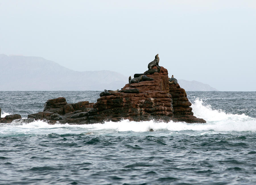 Sea Lion Photograph - King Of The Hill by Richard Steinberger