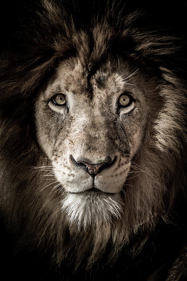 King of the Jungle by Ron Pate