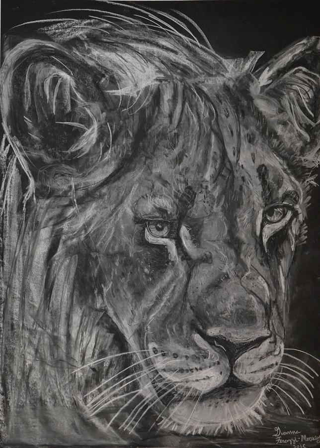Lion Drawing - King Of The Kruger by Gianna Ferazzi-Mooney
