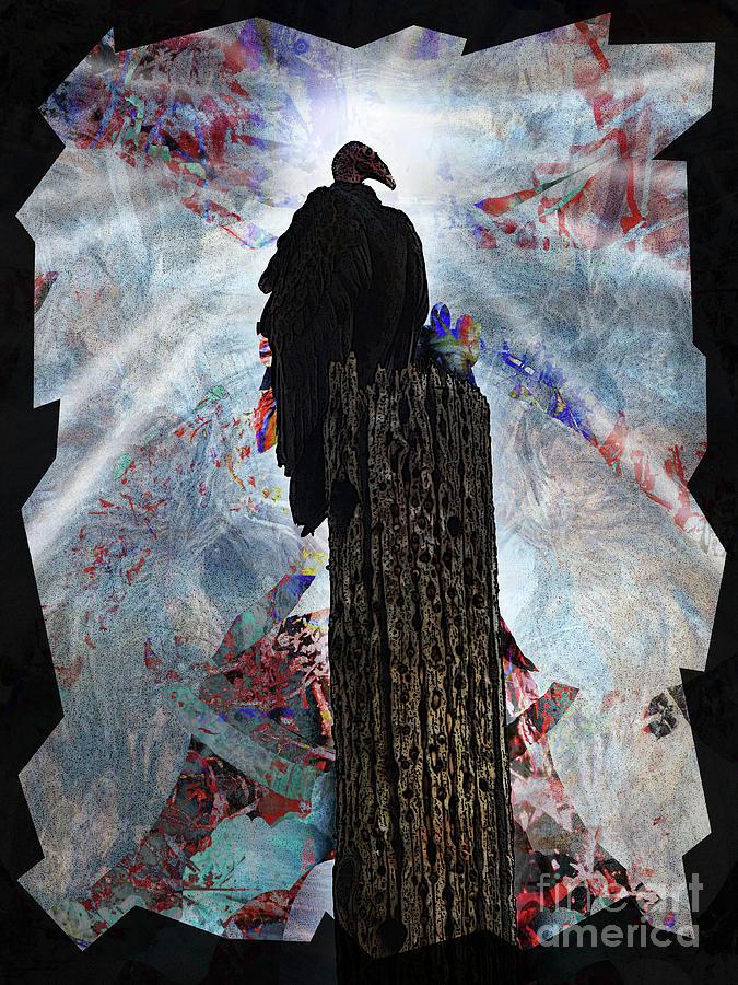 King Photograph - King Vulture by Robert Ball