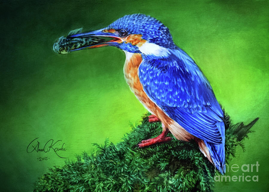 Kingfisher Painting - Kingfisher by Anne Koivumaki - Fine Art Anne