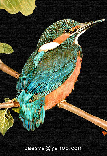 Kingfisher Painting by Carlos Esquivel