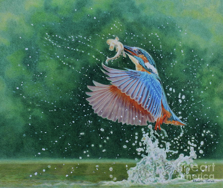 Kingfisher Explosion by Elaine Jones