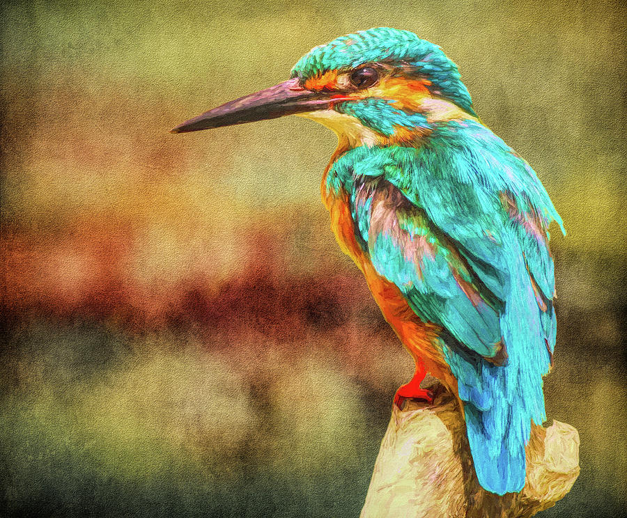 Kingfisher's Perch 2 by Roy Pedersen