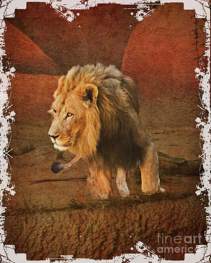 King_of_theJungle by Scott Parker