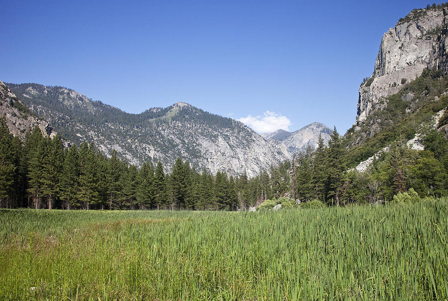 Kings Canyon National Park Photograph - Kings Meadow by Rick Pham