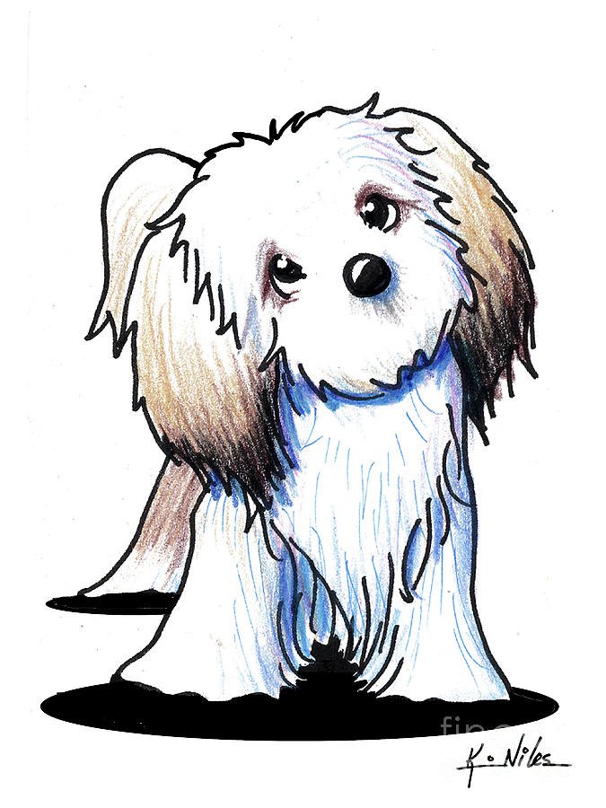 Kiniart Lhasa Apso Drawing By Kim Niles