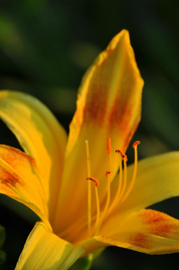 Flowers Photograph - Kissed By The Sun by Cheryl May