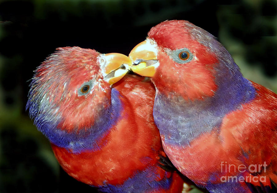 Kissing Photograph - Kissing Birds by David Lee Thompson