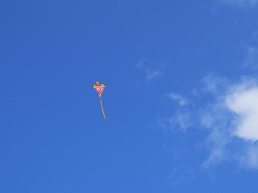 Kite Flying Photograph - Kite Flying  by Carol McCutcheon