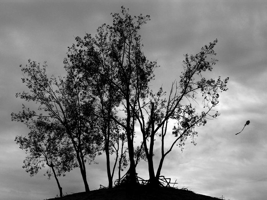 Kite Photograph - Kite by Todd Fox