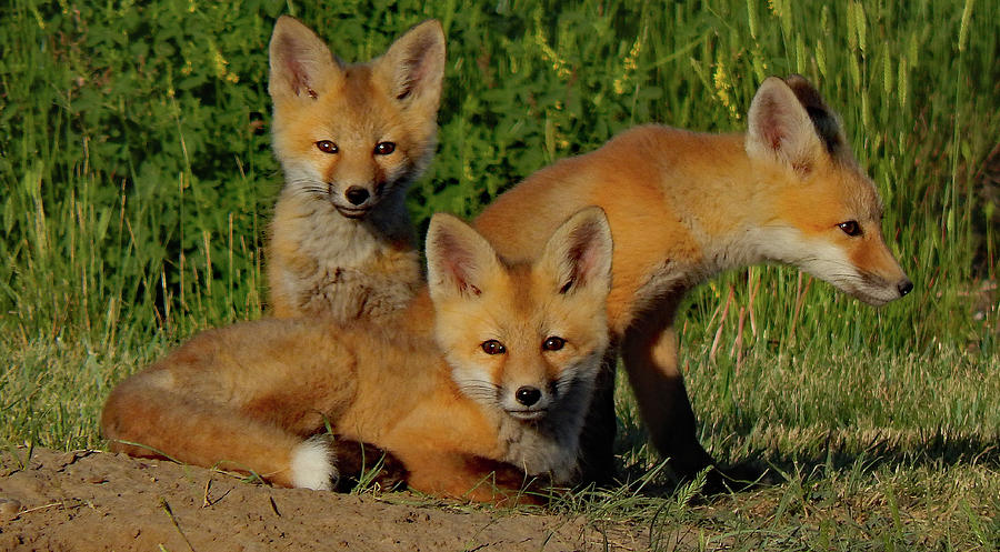 Kits at Play by Frank Vargo