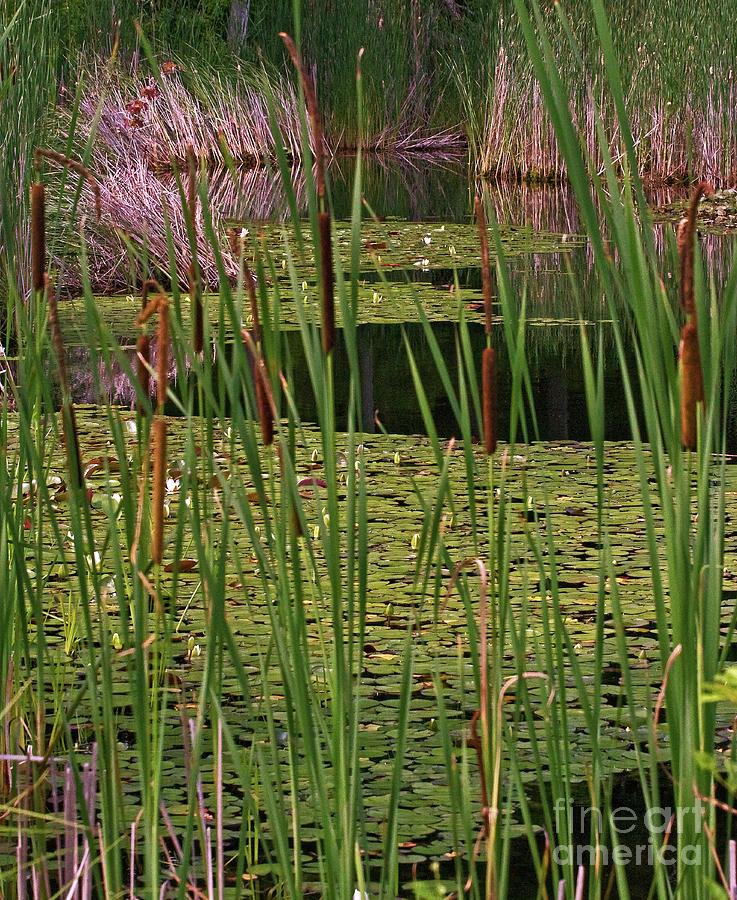 Andover Photograph - Kittatiny Spring by Robert Pilkington