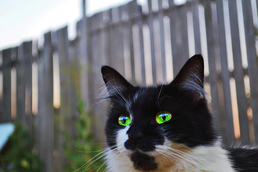 Kitten At Twilight Photograph