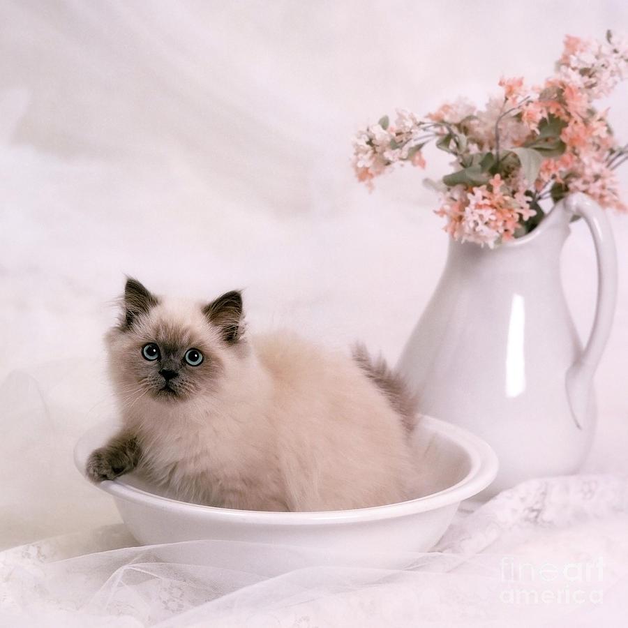 Animal Photograph - Kitten Bath by Crystal Garner