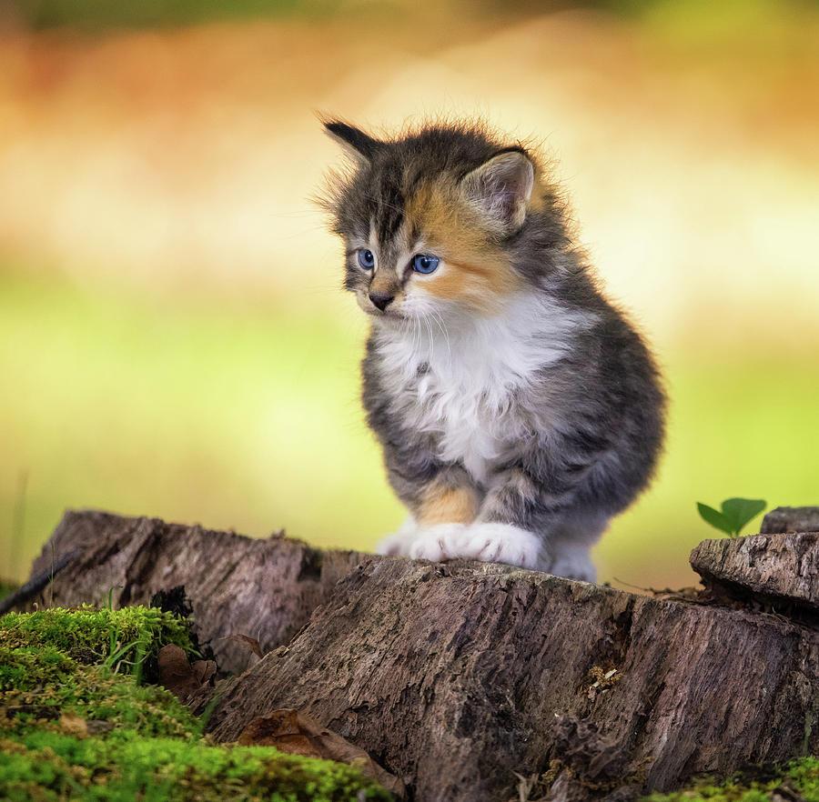 Kitten On A Tree Trunk Photograph by Jonathan Ross