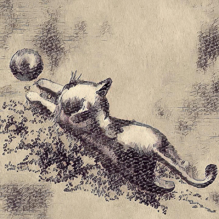 Kitten Playing with Ball by Portraits By NC