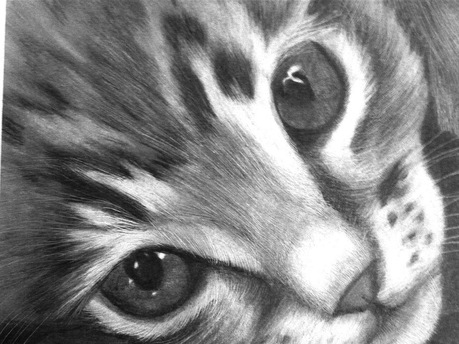 Kitten Drawing By Susan Barwell