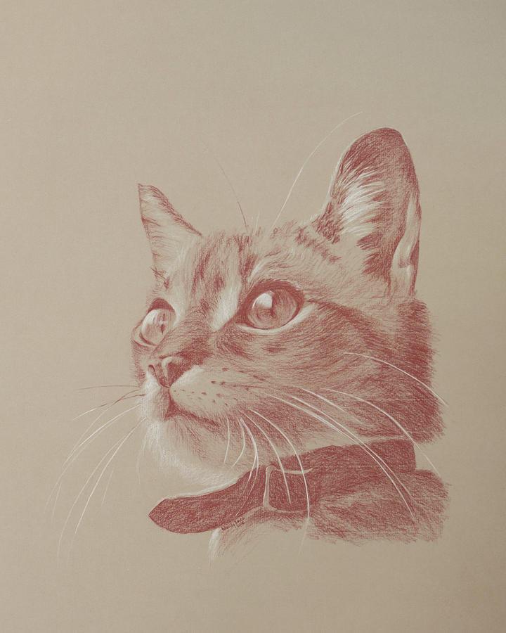 Animal Drawing - Kitten Wonder by Wendy Booth