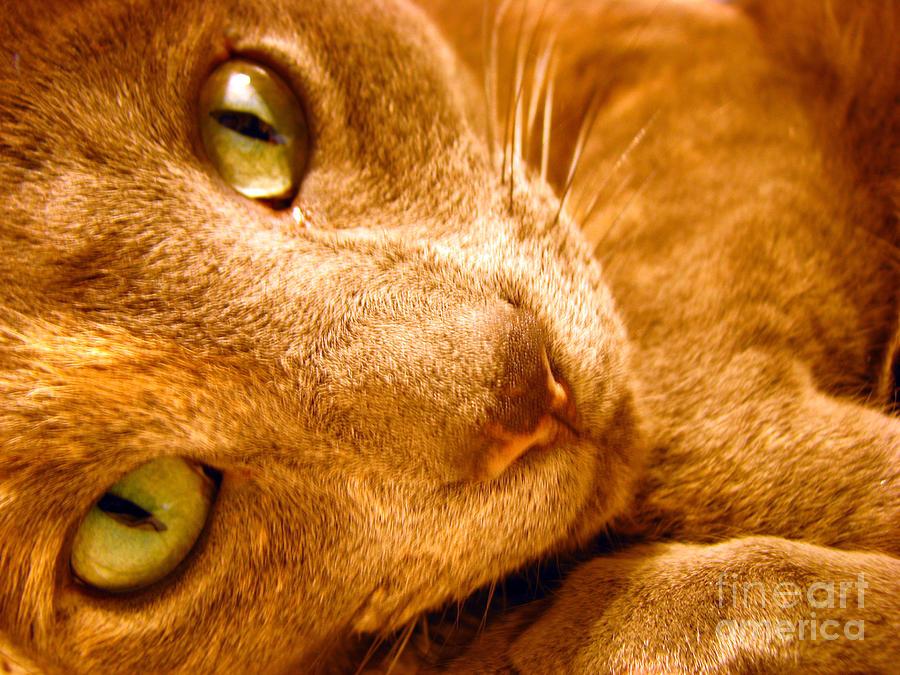Cats Photograph - Kitty by Amanda Barcon