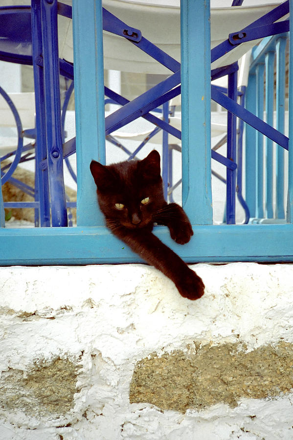 Animals Photograph - Kitty And The Blue Rail by Frank DiMarco
