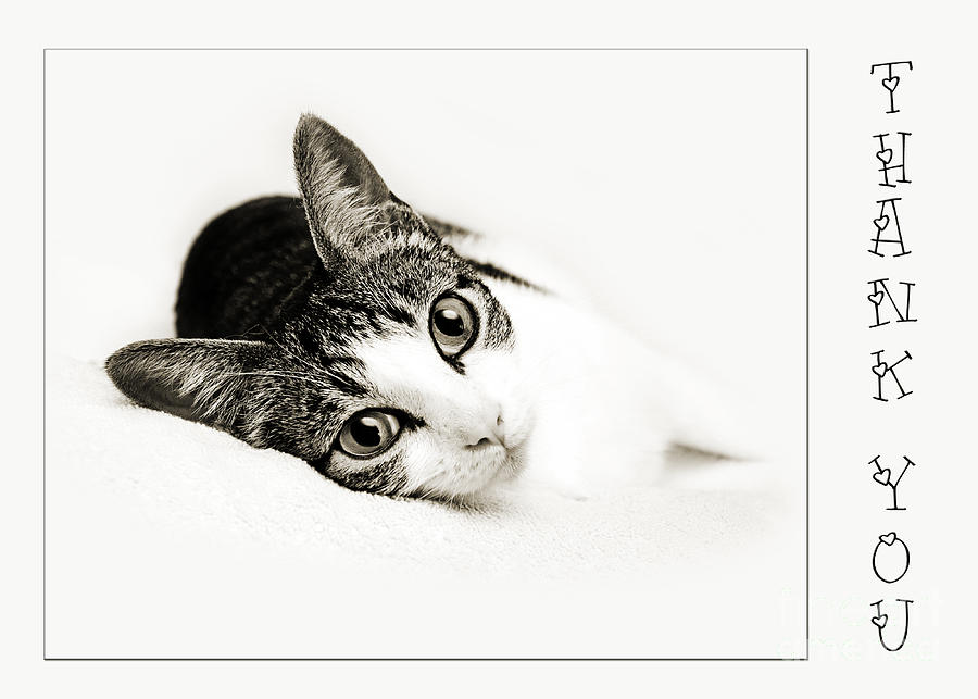 Kitty Cat Greeting Card Thank You Photograph By Andee Design