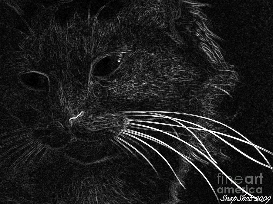 Black And White Photograph - Kitty by Emily Kelley