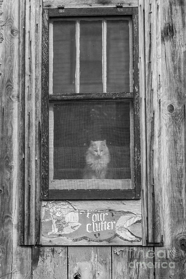kitty in the windos photograph by larry braun