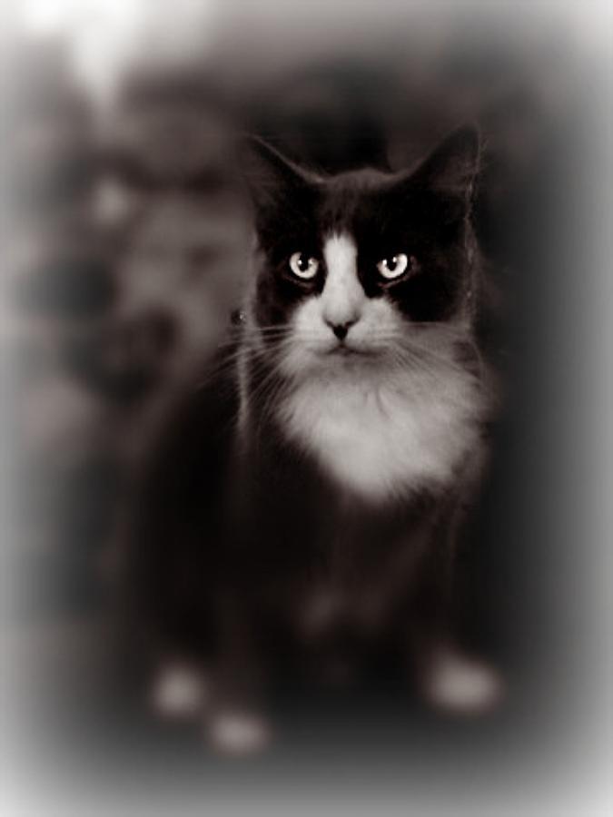 Cat Photograph - Kitty Kitty by Trisha Scrivner