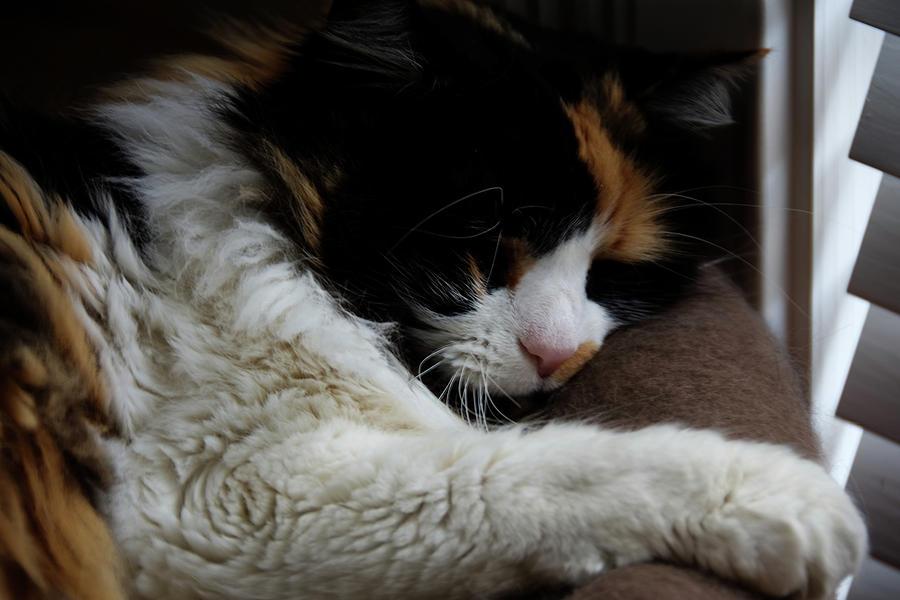 Kitty Korner Photograph
