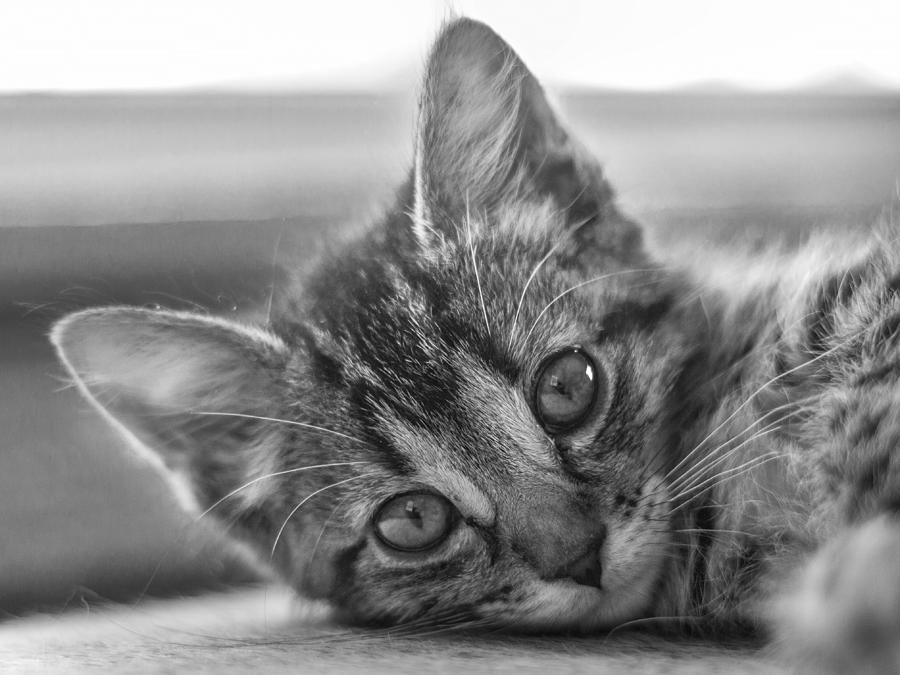 Cat Photograph - Kitty Nap by Chance Kirby