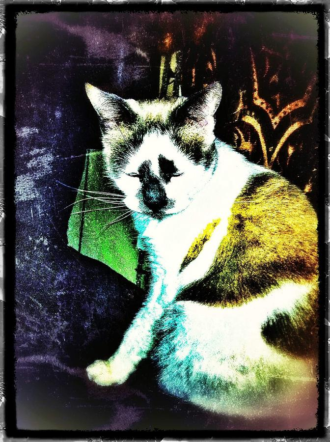 Cat Photograph - Kitty Over The Shoulder by Eddie G