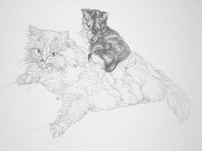 Print Drawing - Kittyback by Joanie Arvin