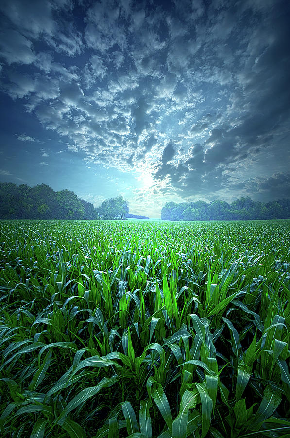 Clouds Photograph - Knee High by Phil Koch