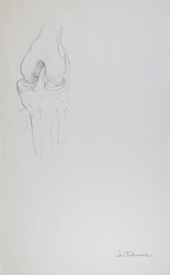 Knee Joint. Student Work. Drawing