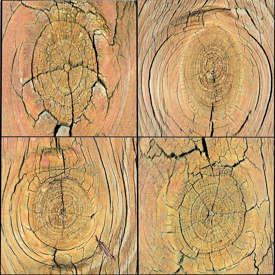 Wood Photograph - Knots #1 by Kevin Carbone