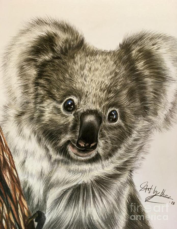 Koala Bear Drawing By Art By Three Sarah Rebekah Rachel White