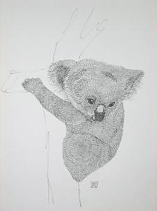 Print Drawing - Koala Bear by Joanie Arvin