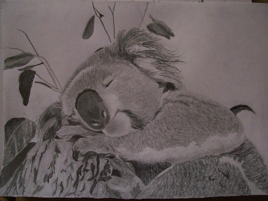 Koala Bear Sleeping Original Pencil Sketch By Pigatopia Drawing By