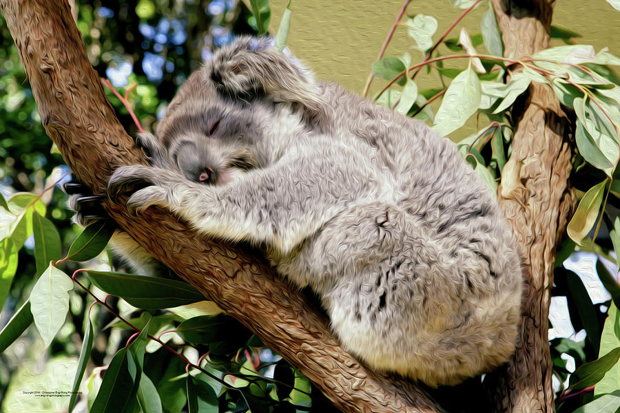 Australia Digital Art - Koala by Christopher Eng-Wong