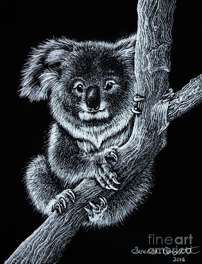 Koala Drawing - Koala by Senecca Corsetti