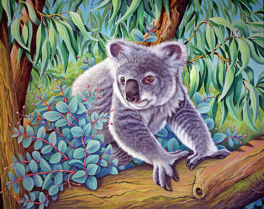 Koala by Tish Wynne