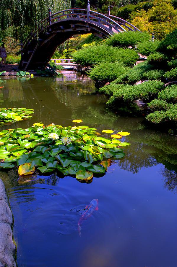 Koi in japanese garden pond photograph by lori seaman for Koi japanese garden screensaver